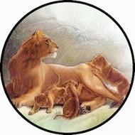 Lioness BR