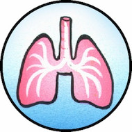 Lungs BR