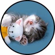 Newborn Kitten BR