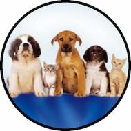 Pets BR