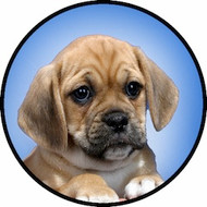 Puggle Pup BR