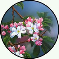 Apple Blossom BR