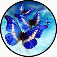 Kites of Blue BR