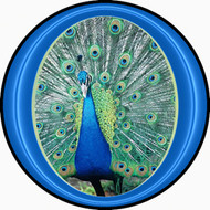 Peacock BR