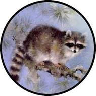 Raccoon BR