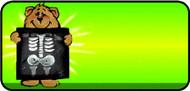X Ray Bear Green