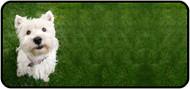 Westie on Grass