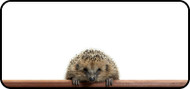 Peeking Hedgehog