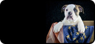 Pup Flag