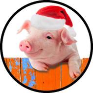 Santa Pig BR