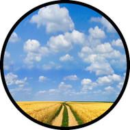 Wheat Field BR