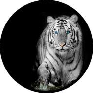 Bengal Eyes BR