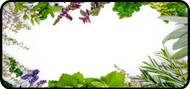 Herbs Border