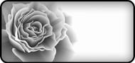 Rose Bloom Black