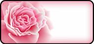 Rose Bloom Pink