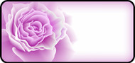 Rose Bloom Purple