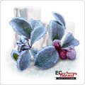 All Natural Wintergreen 100% VG