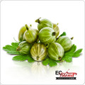 All Natural Gooseberry 100% VG