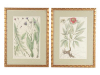 19th Century Hand-Colored Lithographs of Botanical Illustrations