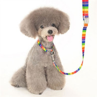 Contempo Rainbow Leash