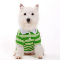 Dogo Candy Stripe Polo