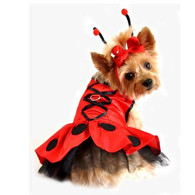 Lady Bug Fairy Harness Costume