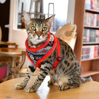 Catspia Penelope Harness