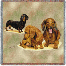 Dachshund Puppies - Lap Square