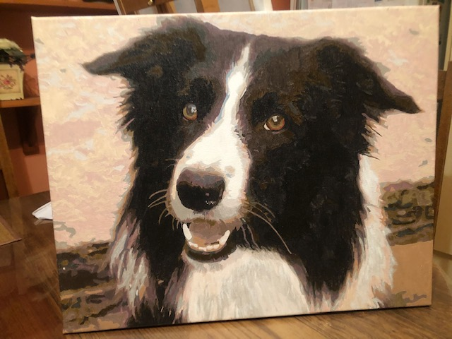 Border Collie by Chris R