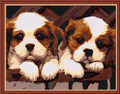 Two Brown & White Puppies