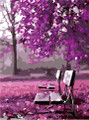 Bench in Purple Garden