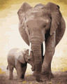 Father and Son elephant