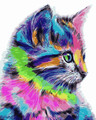 Colourful Kitten