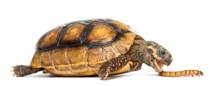 Turtles love Superworms!