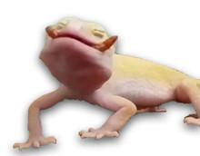 Baby geckos love lots of tot sized treats!