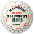 100 Giant Mealworms in a cup