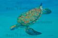 Green Turtle Diving