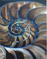 Nautilus Slice by Holly Trew