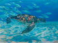 Turtle Harmony by Sue Trew