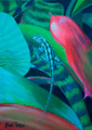 Close-up bromiliad leaves by Sue Trew