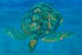 Tile Turtle Advancing