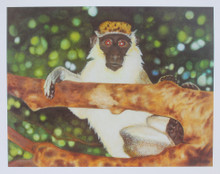 A print of a Barbados Green Monkey