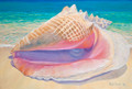 Queen Conch by Sue Trew