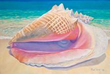 Queen Conch by Sue Trew