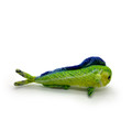 Rainbow the Dolphinfish - pocket size.