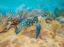 A hawksbill turtle in an underwater garden of soft corals.