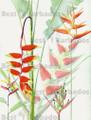 Heliconia Print