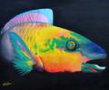 Parrot Fish Splendour