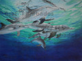 A Pod of Dolphins by Holly Trew