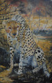Cheetah by Holly Trew